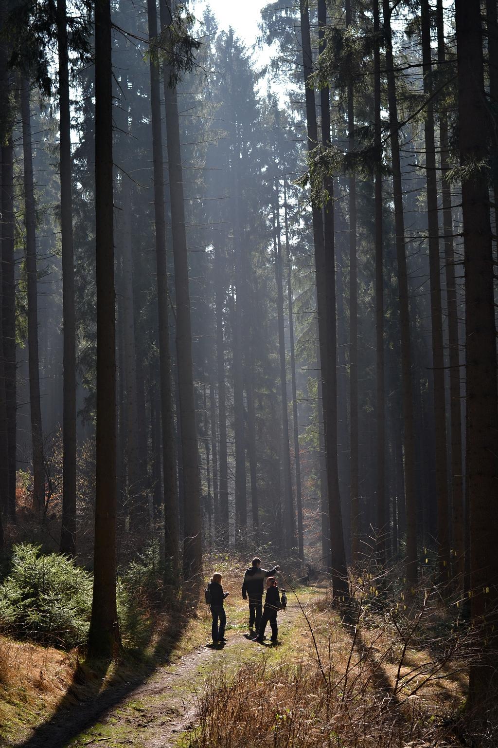 森林 路径 线索 树 性质 路径穿过树林 走 林道 在树林 怀旧之情