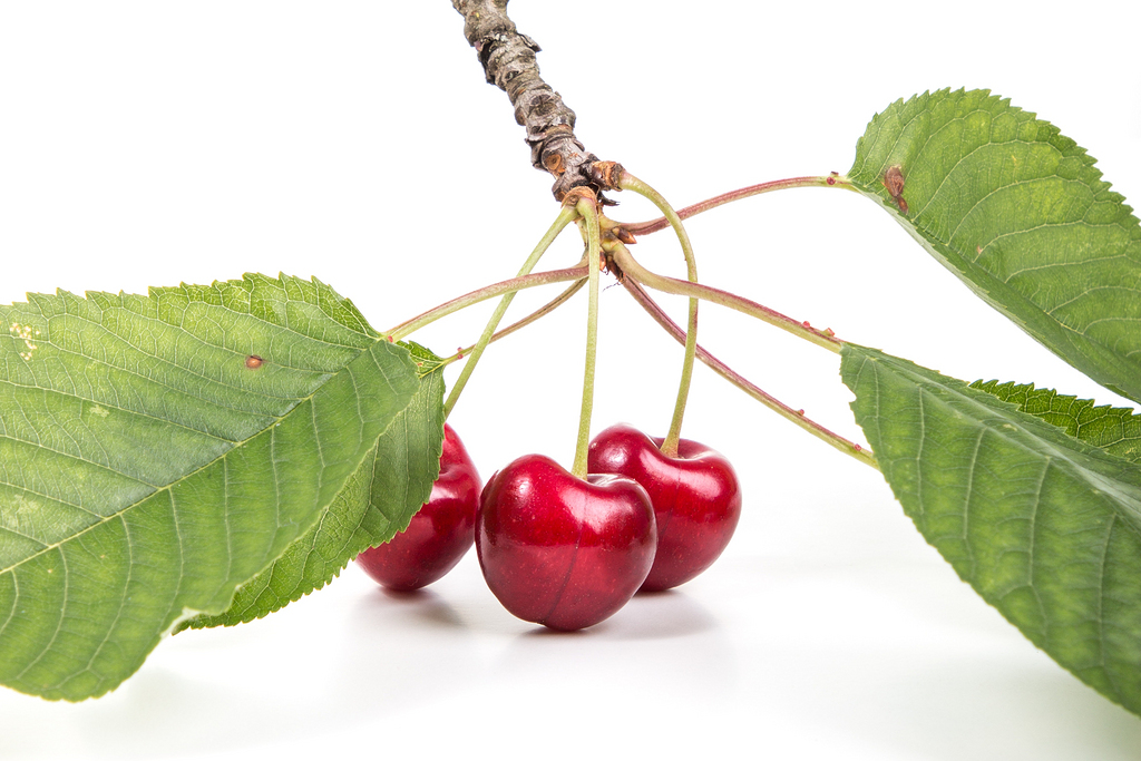 红樱桃果实图片