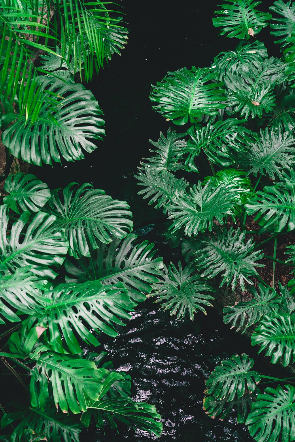被植物包围的水体