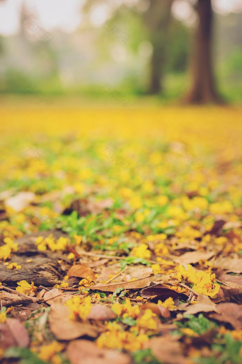地面上树叶的选择性聚焦摄影