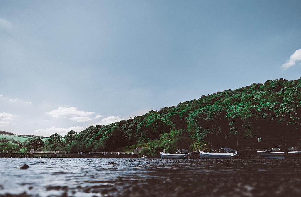 码头附近的小船被高大的树木环绕