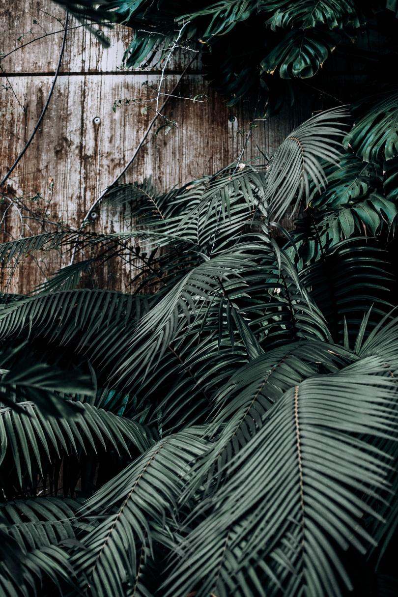 植物绿色植物温室木墙外墙棕榈叶绿色房子绿色色调树叶热带现代绿色植物纹理树叶纹理