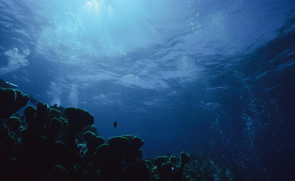 水和珊瑚的身体