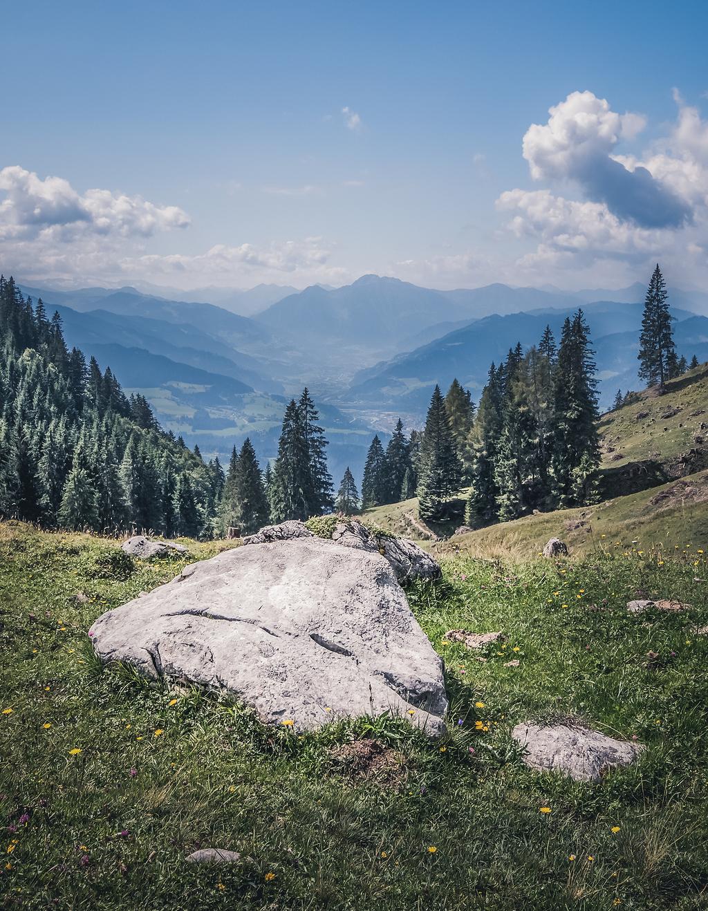 草包围的岩石