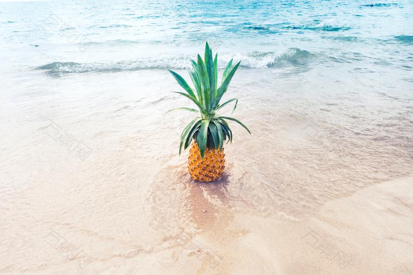 白天海滩沙滩上的菠萝果实